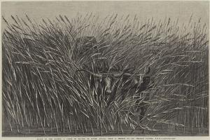 Grass of the Desert, a Scene of Travel in South Africa by Thomas Baines