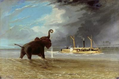 'Ma Robert' and Elephants in the Shallows of the Shire River, 1858