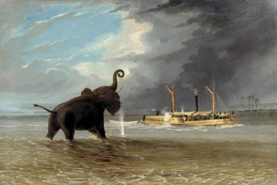 The 'Ma Roberts' and an Elephant in the Shallows, Lower Zambezi, 1859 by Thomas Baines