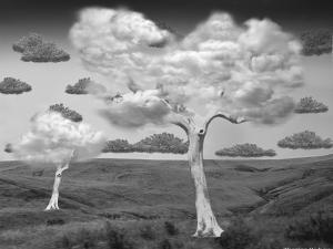 Natural Disorder by Thomas Barbey