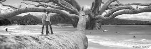 Nut Tree by Thomas Barbey