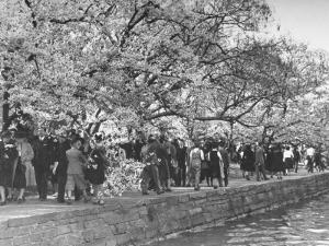 Crowds at the Cherry Blossom Festival by Thomas D. Mcavoy