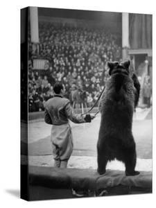 Dancing Bear at the Circus by Thomas D. Mcavoy