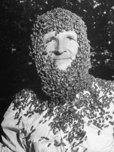 Ethan Andrews Wearing Beard of Bees by Thomas D. Mcavoy