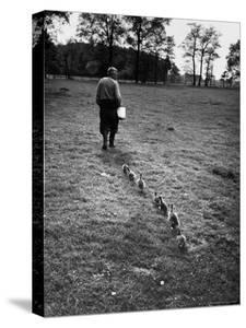 German Ethologist Dr. Konrad Z. Lorenz Studying Habits of Ducks and Geese at Woodland Institute by Thomas D. Mcavoy