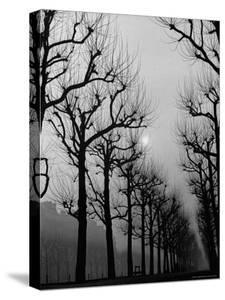 Very Foggy Mood Shot Including Chestnut Trees by Thomas D. Mcavoy