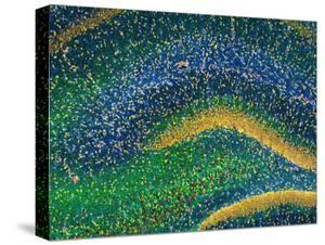 Hippocampus Brain Tissue by Thomas Deerinck
