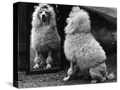 Fall, Poodle and Mirror