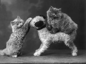 These Two Kittens Have Fun with a Toy Dog by Thomas Fall