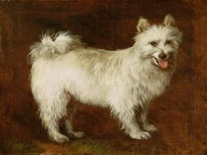 Spitz Dog, c.1760-70 by Thomas Gainsborough