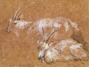 Study of Goats by Thomas Gainsborough