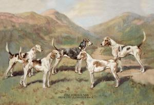 Fell Foxhounds by Thomas Ivester Llyod
