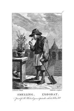 Gardener Smelling a Carnation or Pink (Dianthu), C1750