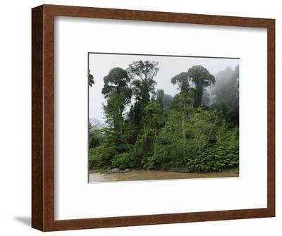 Foggy and Misty Lowland Rainforest at Dawn in the Danum Valley Conservation Area, Sabah