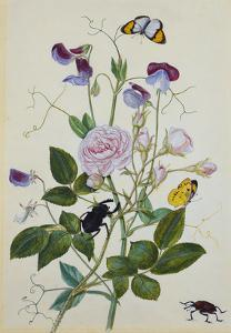 Galica Rose and Perennial Sweet Pea, Weevil, a Beetle and Butterflies by Thomas Robins Jr