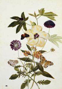 Milkweed, Poppy and Hibiscus with Butterflies and a Beetle by Thomas Robins Jr