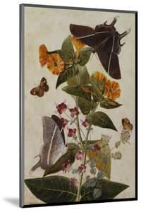Study of Mirabilis and Origanum Dictamnus with Swallowtail and Ringlet Butterflies by Thomas Robins Jr