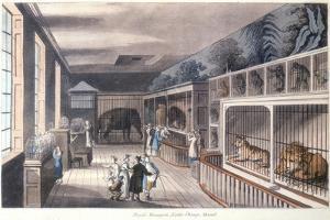 Royal Menagerie, Exeter Change, Strand, London, C1820 by Thomas Rowlandson