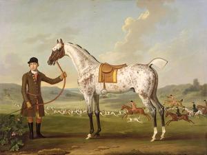 Scipio, Colonel Roche's Spotted Hunter, c.1750 by Thomas Spencer