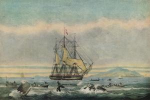 South Sea Whale Fishery, 1825 by Thomas Sutherland