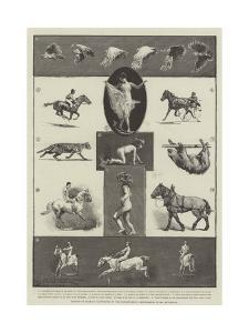 Motions of Animals Illustrated by the Instantaneous Photographs of Mr Muybridge by Thomas Walter Wilson