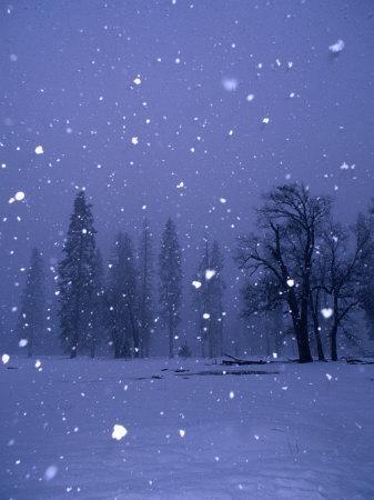 Falling Snow, Yosemite National Park, California, USA