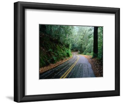 Rain and Wet Roads through the California Forests, California