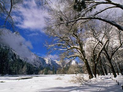 Trees and Mountains, Winter, Yosemite Valley, U.S.A.