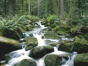 Forest, Brook, Stones, Moss by Thonig