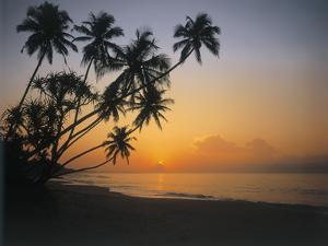 Palm Beach, Sunset by Thonig