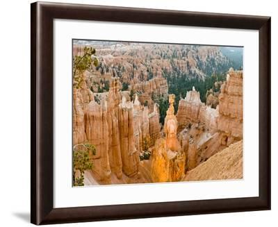 Thor's Hammer, Hoodoo, Bryce Canyon National Park, Utah, USA-Tom Norring-Framed Photographic Print