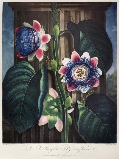 Thornton: Passion-Flower-James, The Elder Hopwood-Giclee Print