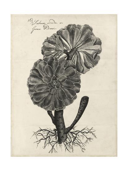 Thornton Succulents II-Robert Thornton-Art Print