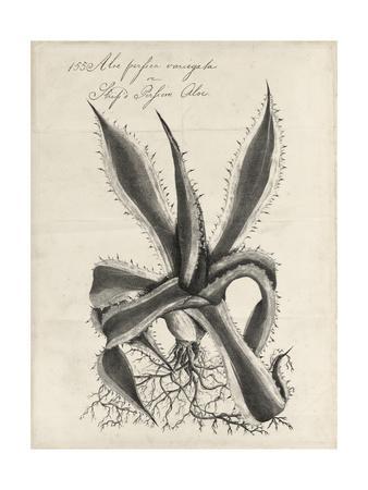 https://imgc.artprintimages.com/img/print/thornton-succulents-iii_u-l-q19bipo0.jpg?p=0