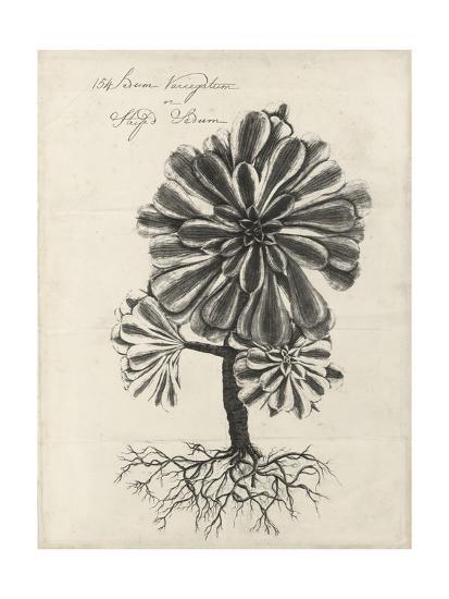Thornton Succulents IV-Robert Thornton-Art Print