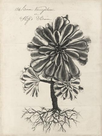 https://imgc.artprintimages.com/img/print/thornton-succulents-iv_u-l-q19bioz0.jpg?p=0