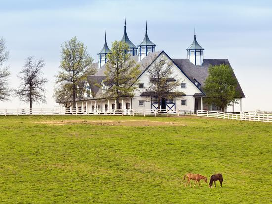 Thoroughbred Horses Grazing, Manchester Horse Farm ...