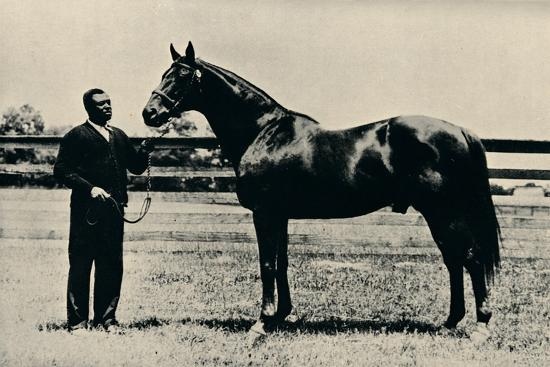 Thoroughbred racehorse, Man O' War, c1920-Unknown-Photographic Print