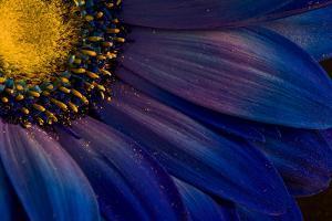 Blue Rays by Thorsteinn H.