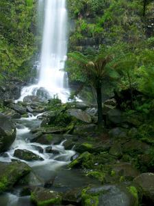 Erskine Falls, Waterfall in the Rainforest, Great Ocean Road, South Australia, Australia by Thorsten Milse