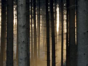 Fog in the Forest, Bielefeld, North Rhine-Westphalia, Germany by Thorsten Milse