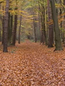 Forest Way, Paderborn, Germany by Thorsten Milse