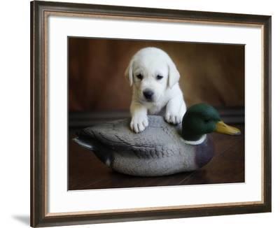 THPpuppy-E6J0237c-Tanya Hovey-Framed Photographic Print