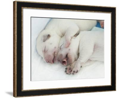 THPpuupy-E6J0022c-Tanya Hovey-Framed Photographic Print