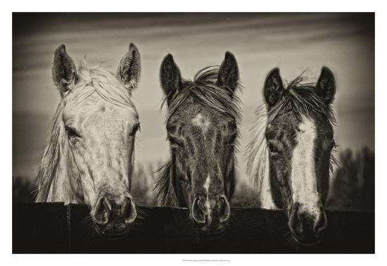 Three Amigos I-PHBurchett-Art Print