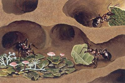 Three Ants in an Anthill--Giclee Print