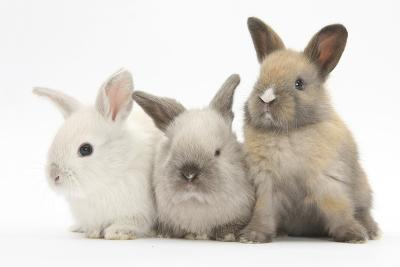 Three Baby Rabbits-Mark Taylor-Photographic Print