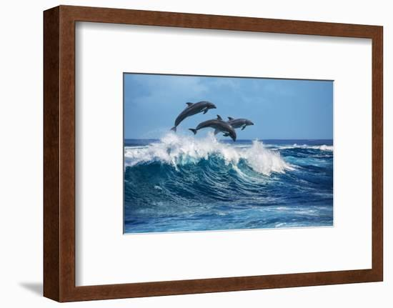 Three Beautiful Dolphins Jumping over Breaking Waves. Hawaii Pacific Ocean Wildlife Scenery. Marine-Willyam Bradberry-Framed Photographic Print