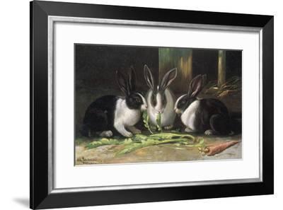 Three Black and White Dutch Domestic Rabbits--Framed Giclee Print