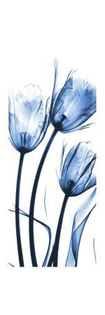 https://imgc.artprintimages.com/img/print/three-blue-tulips_u-l-pyjp150.jpg?p=0